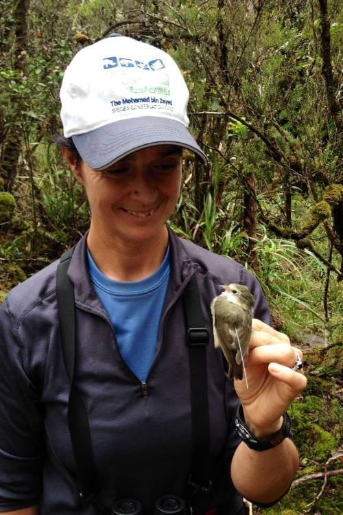 Kaua'i forest bird