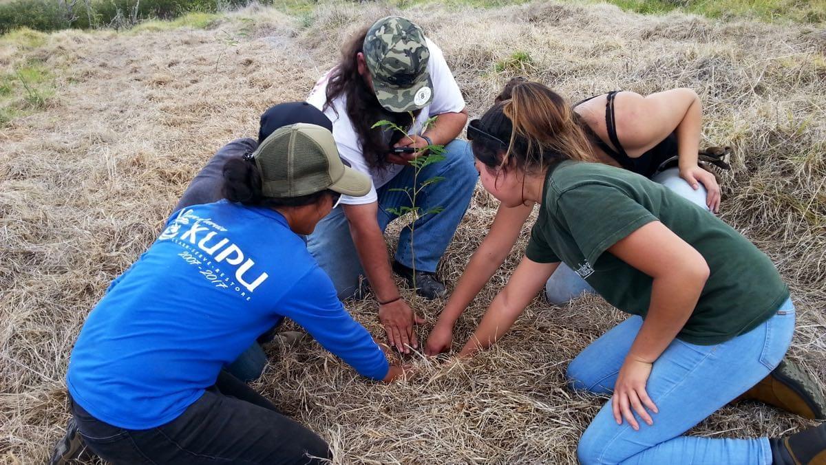Mauna Kea forest restoration